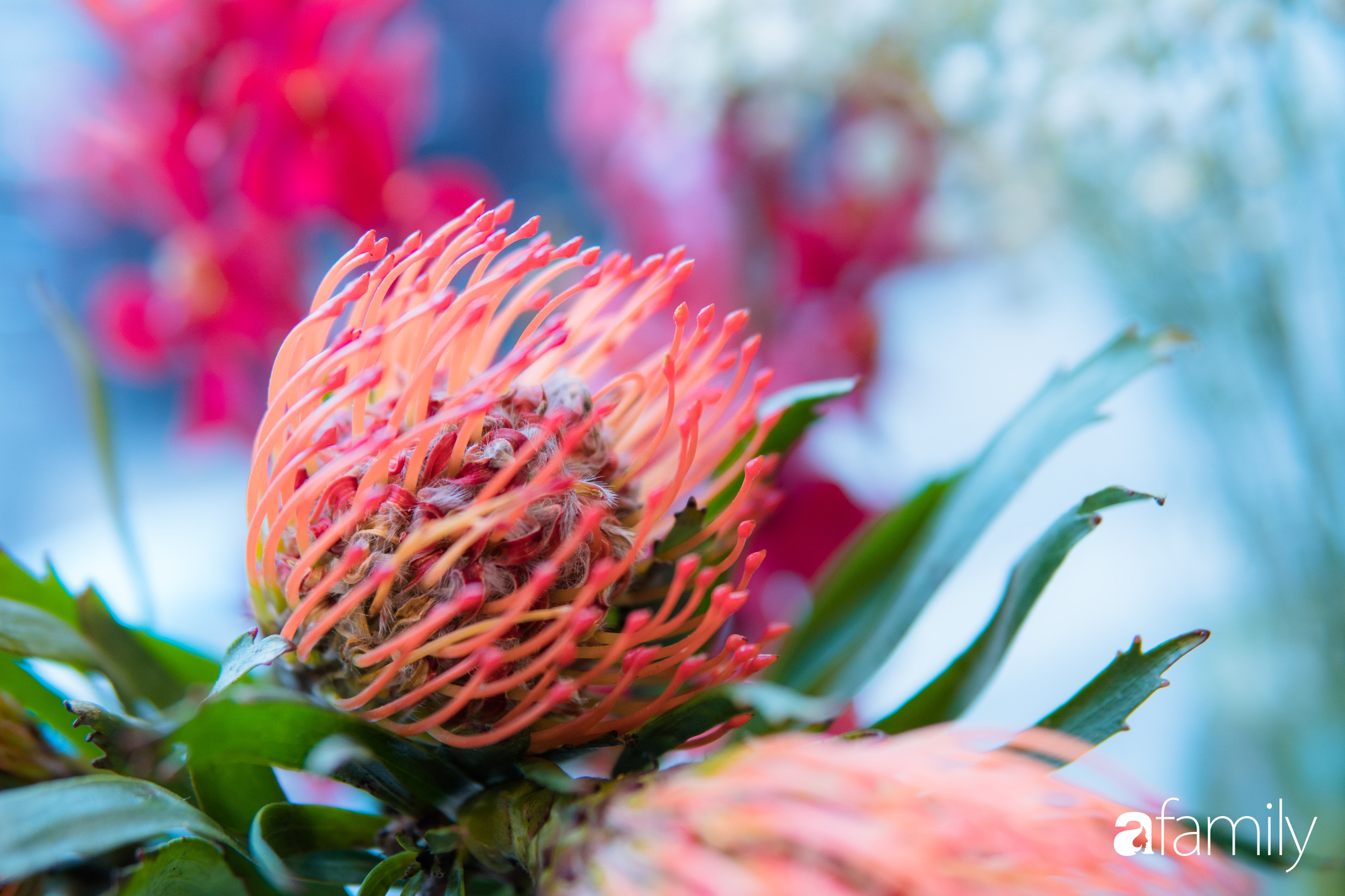 """Ngắm những loài hoa nhập khẩu đẹp lạ """"sang chảnh"""" để hiểu tại sao các đại gia Hà thành sẵn sàng chi 50 triệu sắm hoa đẹp chơi Tết - Ảnh 30."""