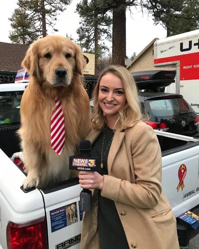 """Chùm ảnh đáng yêu: 15 chú chó xứng đáng được nhận giải thưởng """"nhân viên của tháng""""! - Ảnh 9."""