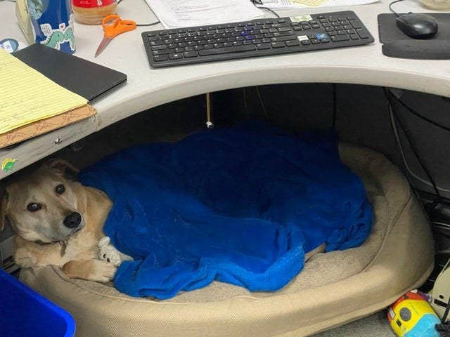 """Chùm ảnh đáng yêu: 15 chú chó xứng đáng được nhận giải thưởng """"nhân viên của tháng""""! - Ảnh 4."""