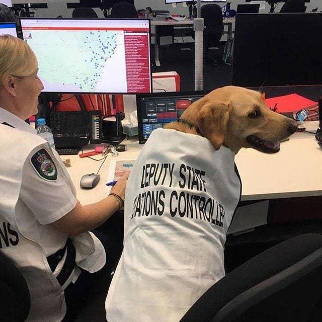 """Chùm ảnh đáng yêu: 15 chú chó xứng đáng được nhận giải thưởng """"nhân viên của tháng""""! - Ảnh 3."""