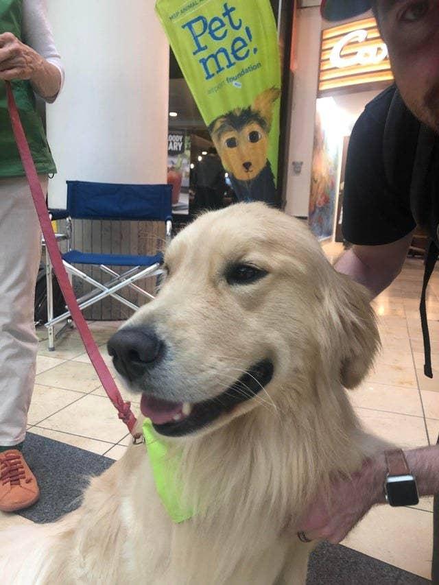 """Chùm ảnh đáng yêu: 15 chú chó xứng đáng được nhận giải thưởng """"nhân viên của tháng""""! - Ảnh 15."""