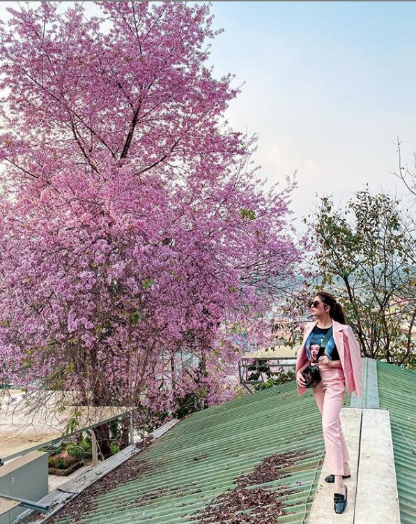 Mùa hoa mai anh đào lại hồng rợp Đà Lạt, hội chị em chen nhau chụp ảnh check in xinh lung linh như ở Hàn - Ảnh 11.