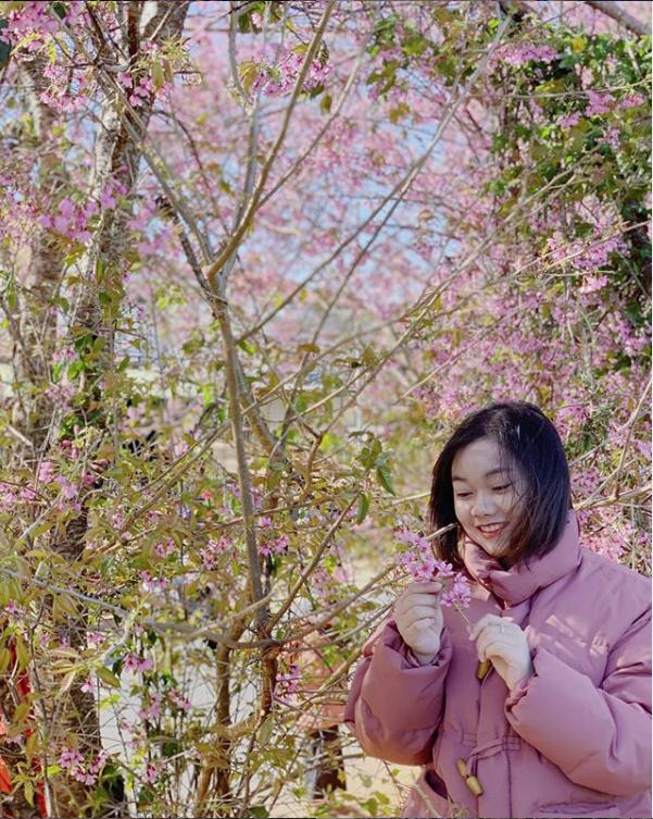 Mùa hoa mai anh đào lại hồng rợp Đà Lạt, hội chị em chen nhau chụp ảnh check in xinh lung linh như ở Hàn - Ảnh 5.