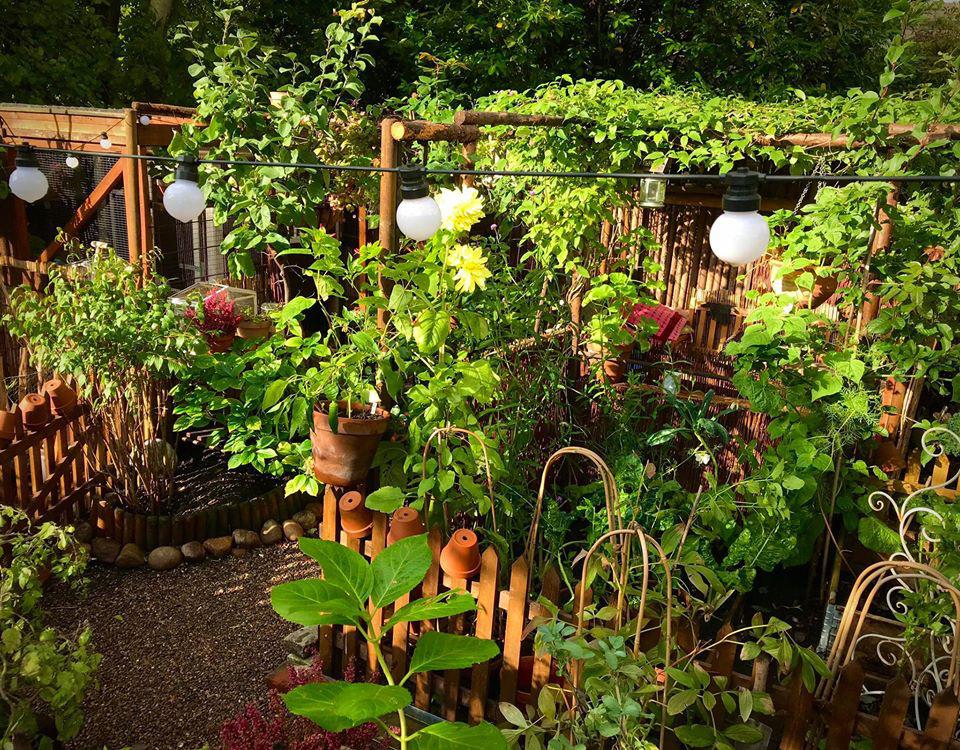 Người phụ nữ quyết bỏ nghề may theo đuổi suốt nhiều năm để trồng hoa, làm vườn quanh nhà - Ảnh 10.