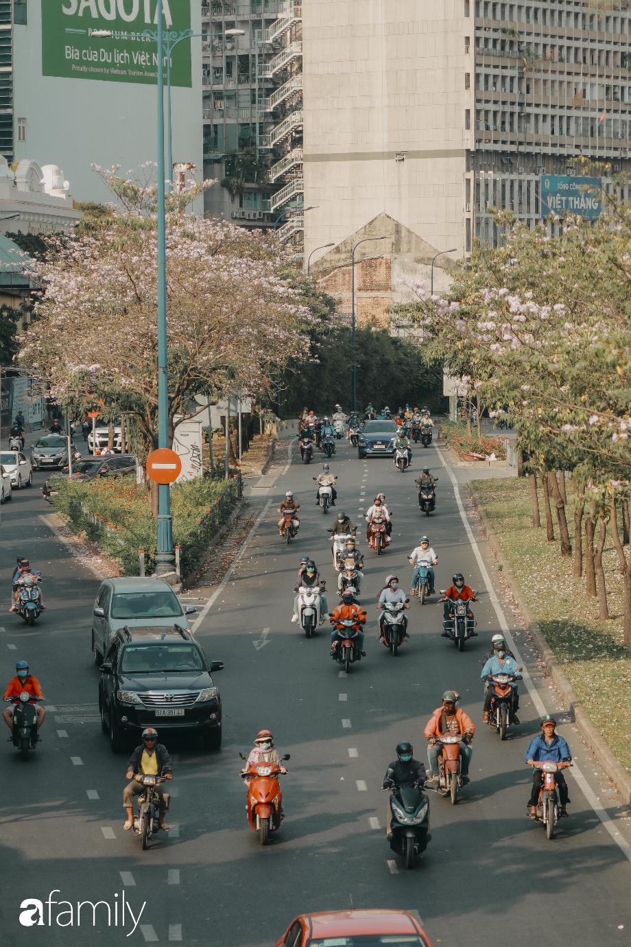 Chùm ảnh: Sài Gòn trở nên khác lạ khi hoa Kèn hồng vào mùa nở rộ, nhưng lạ thay đến hơn một nửa người Sài Gòn chẳng biết đến sự tồn tại của loài hoa này? - Ảnh 4.
