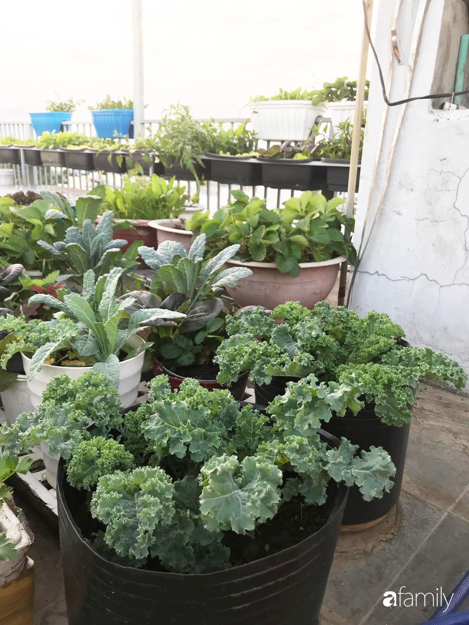 Mong con được ăn ru sạch hàng ngày, bà mẹ Đà Nẵng trồng cả sân thượng tươi tốt nhờ kinh nghiệm đơn giản - Ảnh 16.