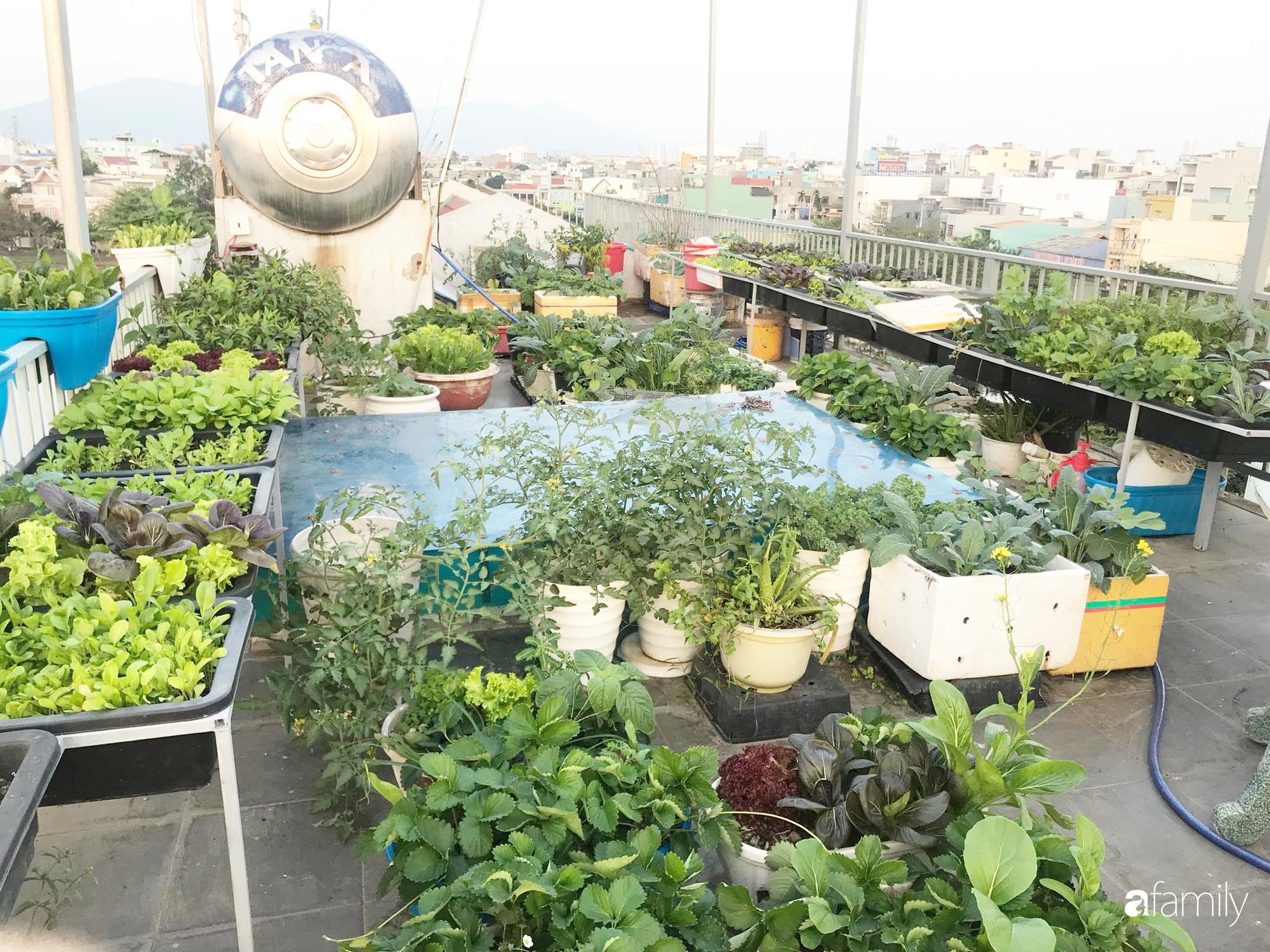 Mong con được ăn ru sạch hàng ngày, bà mẹ Đà Nẵng trồng cả sân thượng tươi tốt nhờ kinh nghiệm đơn giản - Ảnh 1.