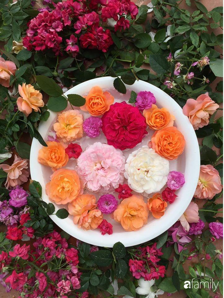 Mê hoa hồng, cô gái trẻ xứ Huế quyết tâm thức khuya dậy sớm tạo cả vườn hồng rực rỡ trên sân thượng - Ảnh 13.