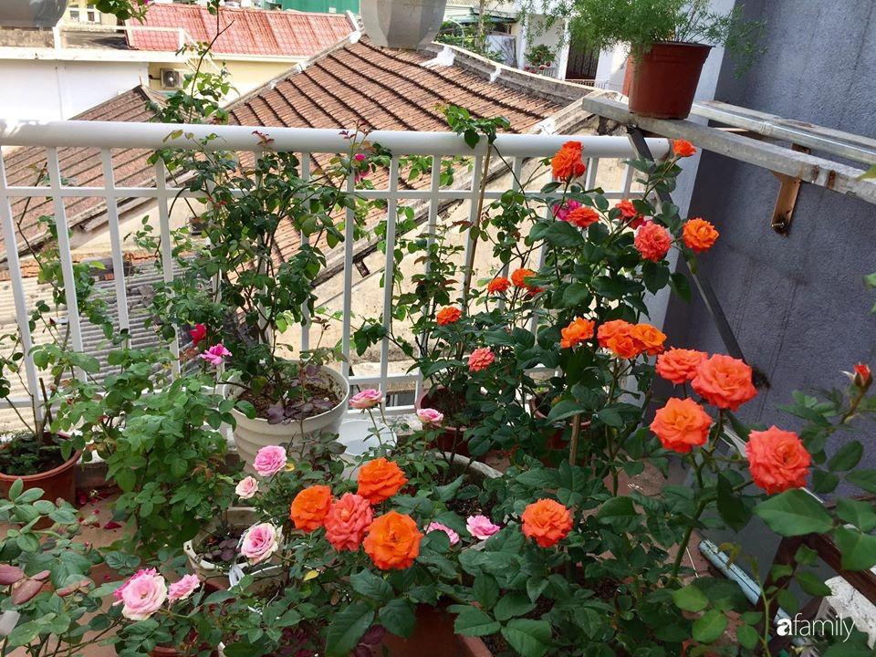 Mê hoa hồng, cô gái trẻ xứ Huế quyết tâm thức khuya dậy sớm tạo cả vườn hồng rực rỡ trên sân thượng - Ảnh 12.