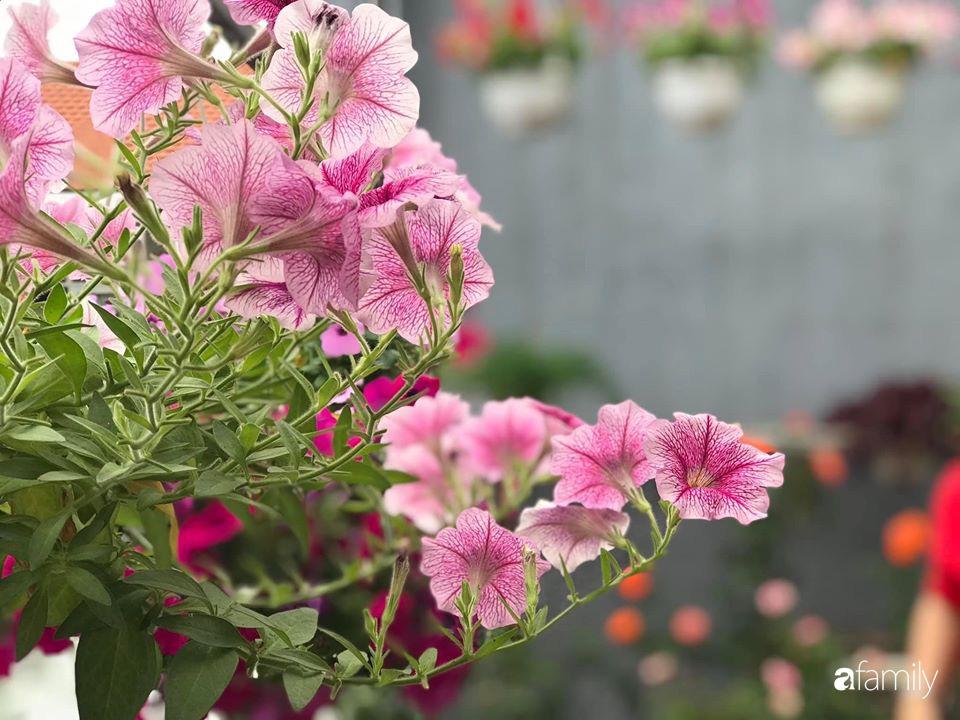 Mê hoa hồng, cô gái trẻ xứ Huế quyết tâm thức khuya dậy sớm tạo cả vườn hồng rực rỡ trên sân thượng - Ảnh 18.