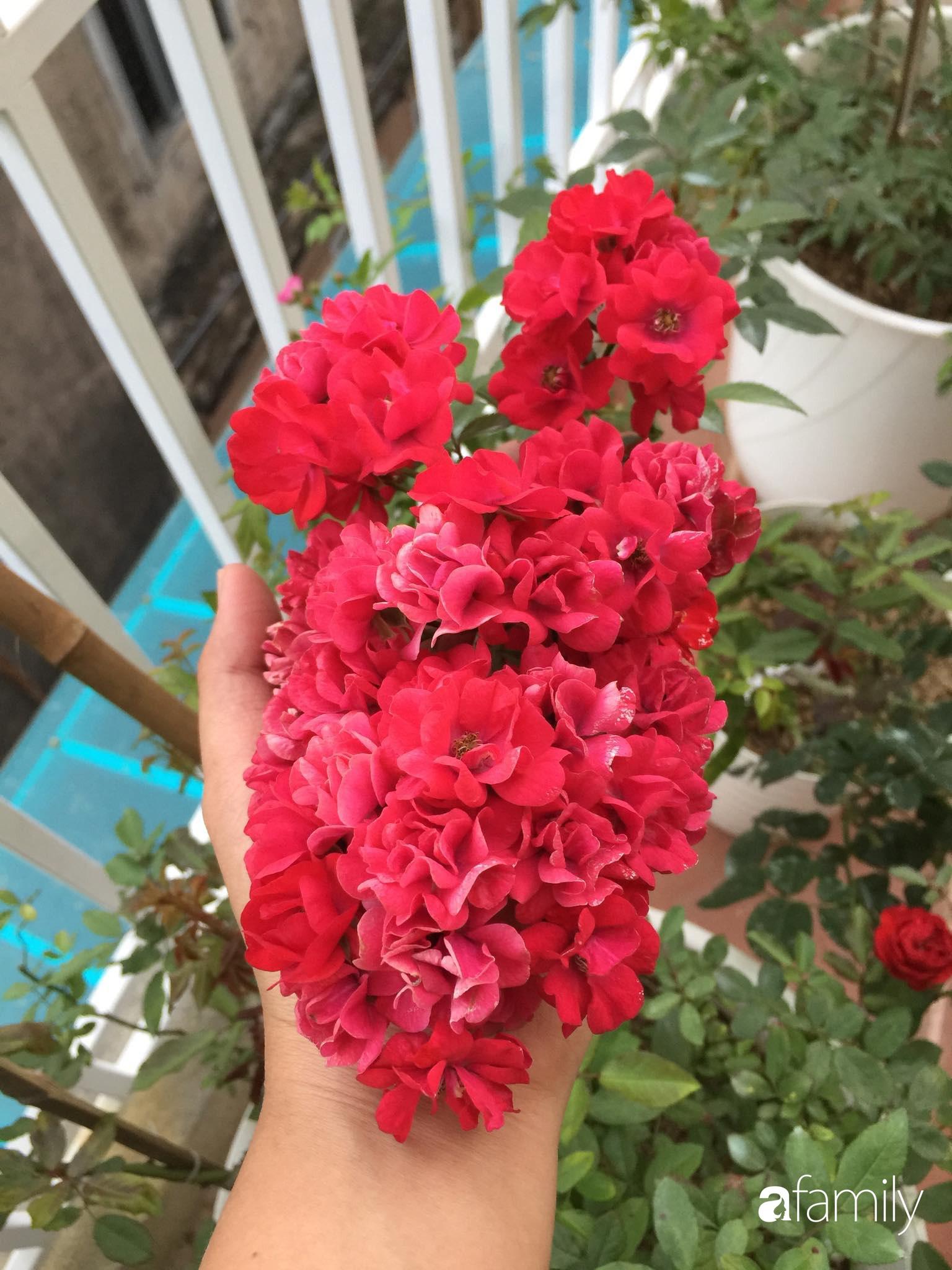 Mê hoa hồng, cô gái trẻ xứ Huế quyết tâm thức khuya dậy sớm tạo cả vườn hồng rực rỡ trên sân thượng - Ảnh 8.