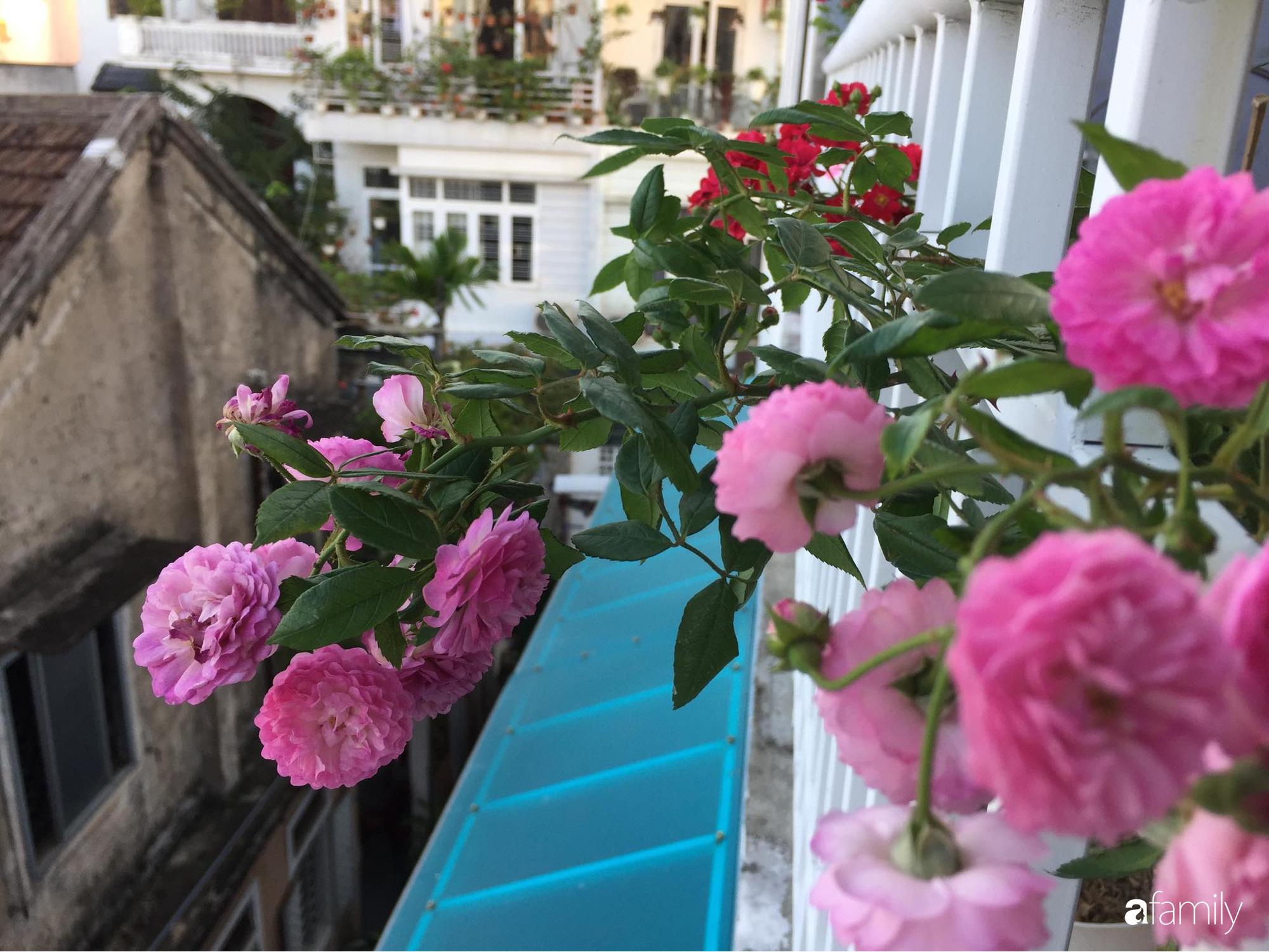 Mê hoa hồng, cô gái trẻ xứ Huế quyết tâm thức khuya dậy sớm tạo cả vườn hồng rực rỡ trên sân thượng - Ảnh 5.