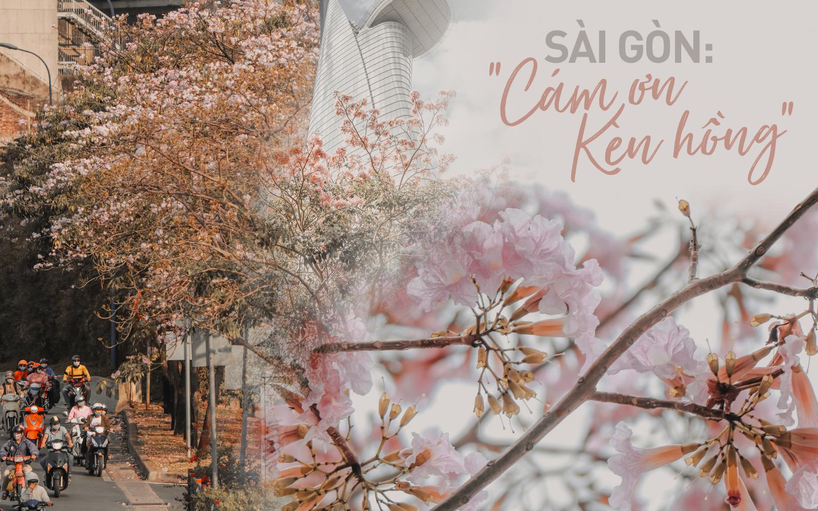 Chùm ảnh: Sài Gòn trở nên khác lạ khi hoa Kèn hồng vào mùa nở rộ, nhưng lạ thay đến hơn một nửa người Sài Gòn chẳng biết đến sự tồn tại của loài hoa này? - Ảnh 1.