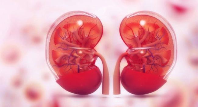 Biotin - hỗ trợ chức năng thận