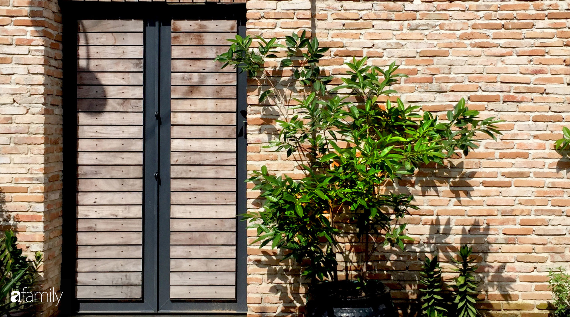 Ngôi nhà rộn ràng sắc màu cây xnh và ánh sáng i ngắm cũng yêu ở TP Biên Hò, Đồng Ni - Ảnh 5.