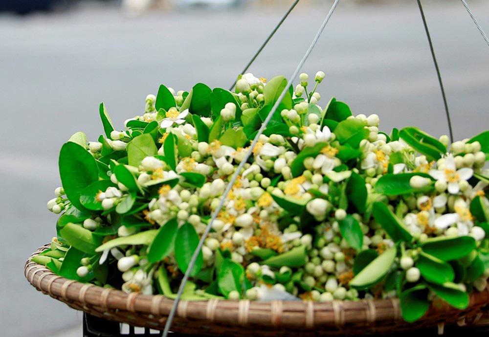 Đầu mùa gánh hoa bưởi xuống phố, giá hơn 300.000 đồng/kg vẫn đắt khách - Ảnh 5.
