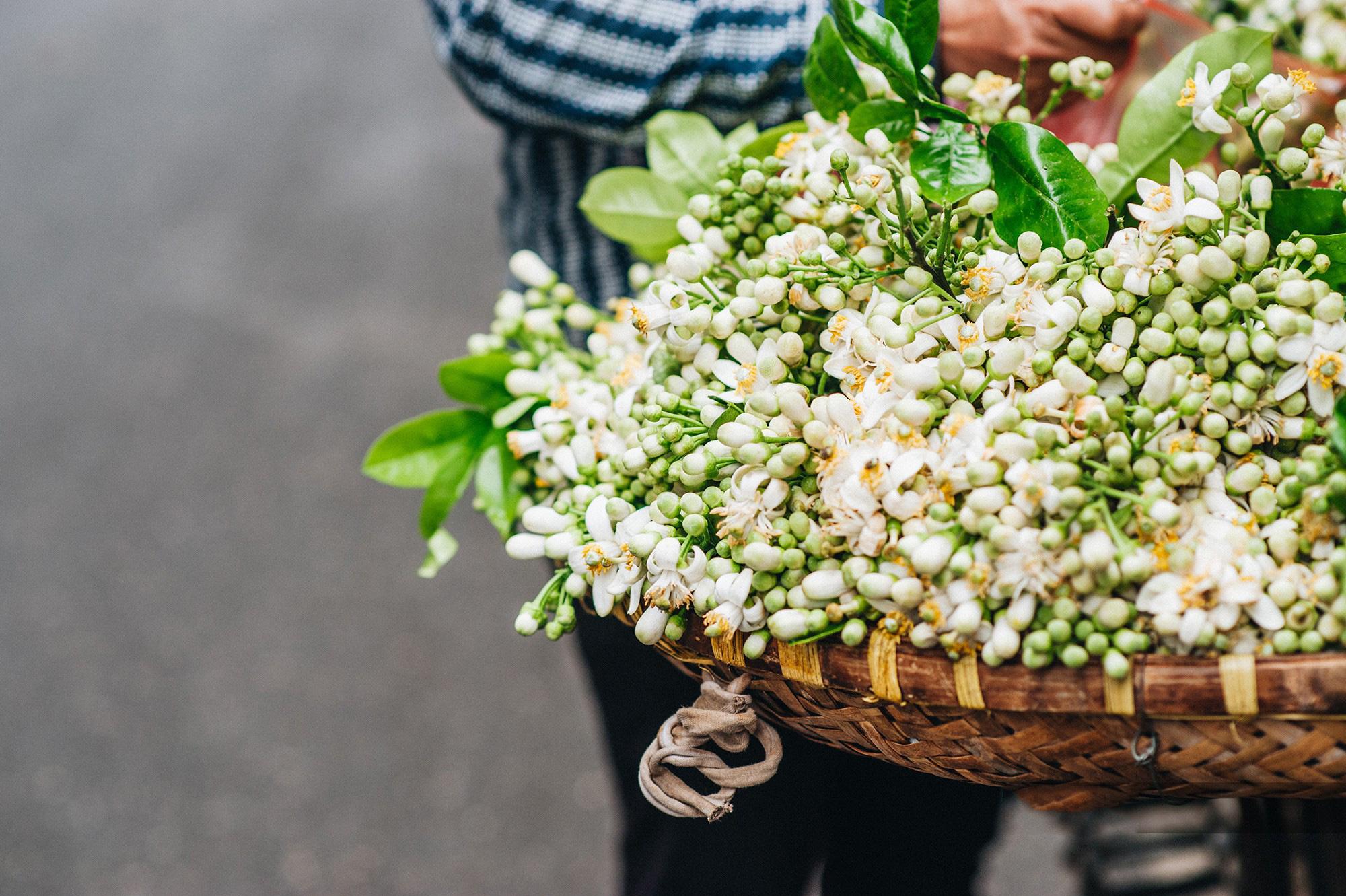 Đầu mùa gánh hoa bưởi xuống phố, giá hơn 300.000 đồng/kg vẫn đắt khách - Ảnh 7.