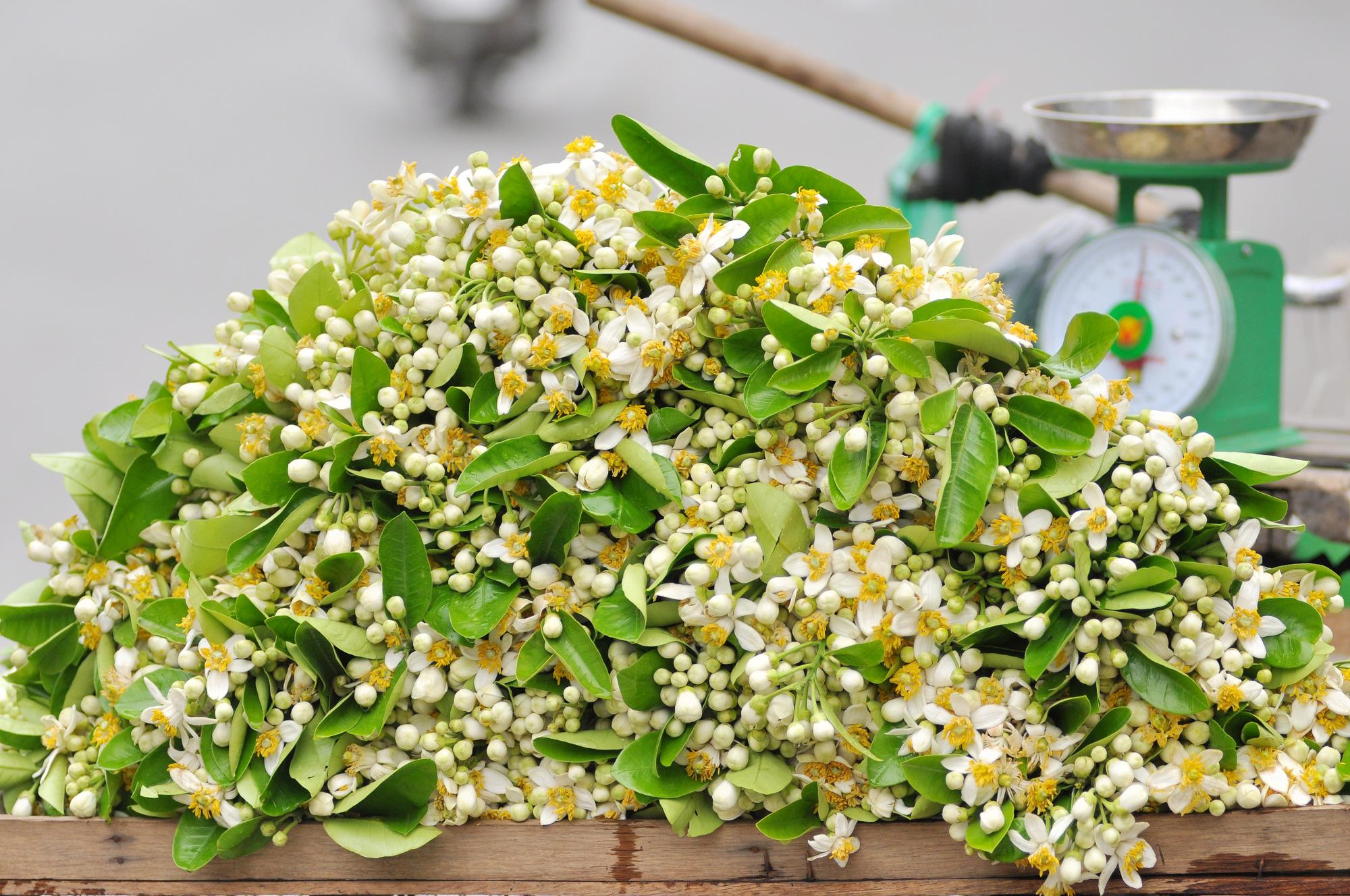 Đầu mùa gánh hoa bưởi xuống phố, giá hơn 300.000 đồng/kg vẫn đắt khách - Ảnh 3.