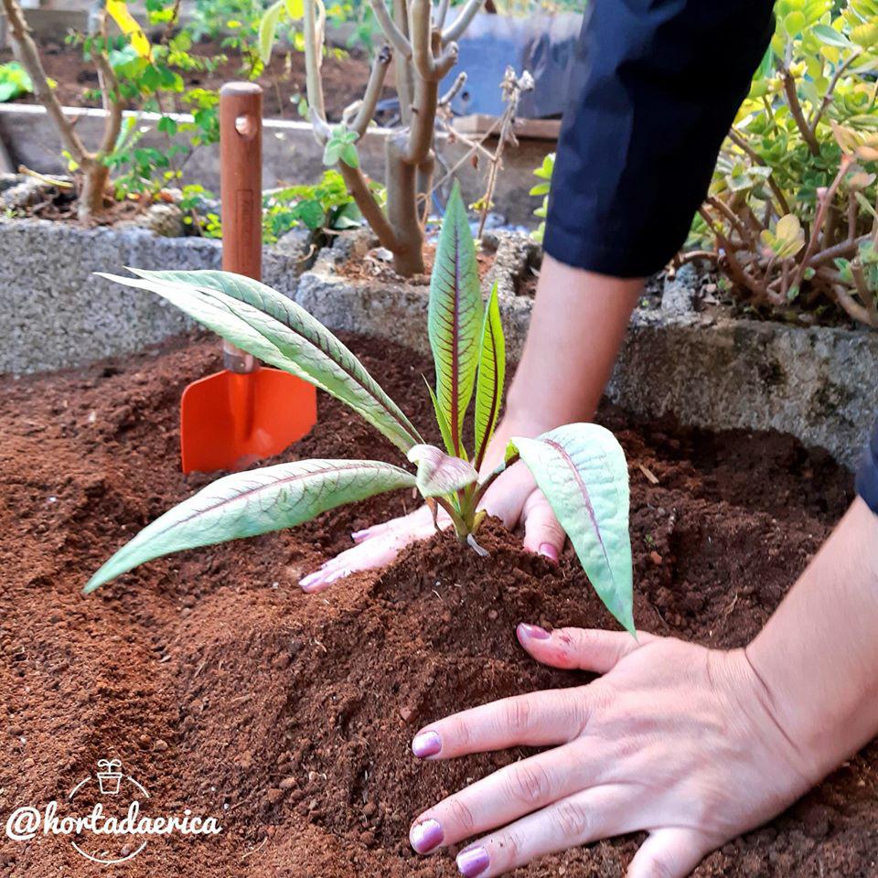 Vườn rau quả sạch tốt tươi rộng 32m2 của nữ y tá đam mê trồng trọt - Ảnh 13.