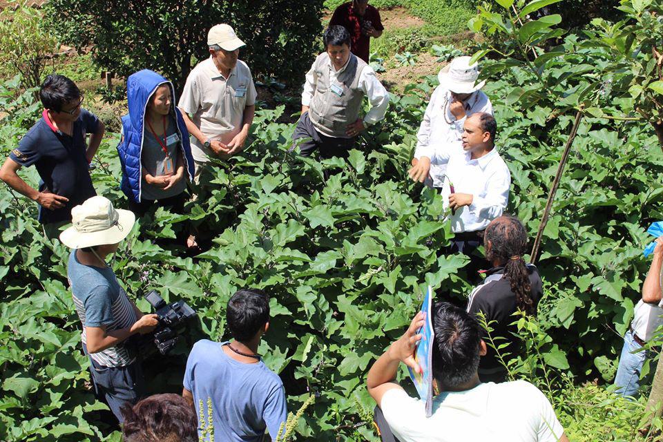 Cuộc sống bình yên, hạnh phúc của gia đình yêu thích trồng trọt tự cung tự cấp trên núi cao - Ảnh 6.
