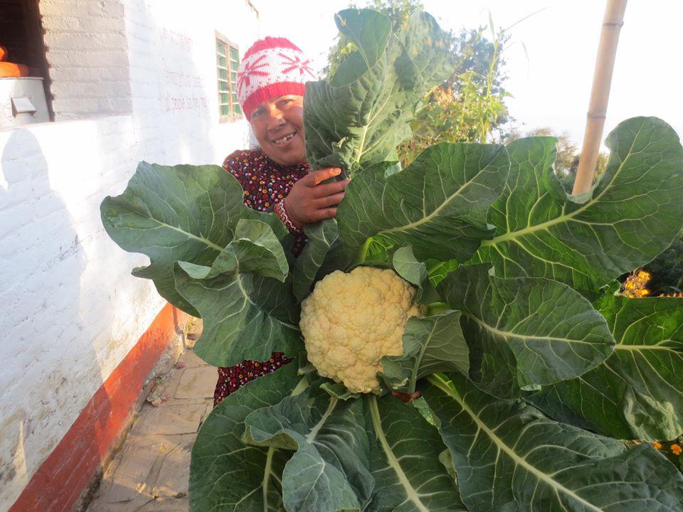 Cuộc sống bình yên, hạnh phúc của gia đình yêu thích trồng trọt tự cung tự cấp trên núi cao - Ảnh 5.