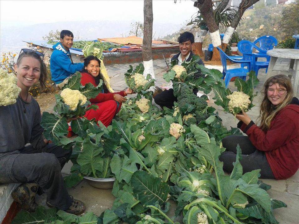 Cuộc sống bình yên, hạnh phúc của gia đình yêu thích trồng trọt tự cung tự cấp trên núi cao - Ảnh 18.