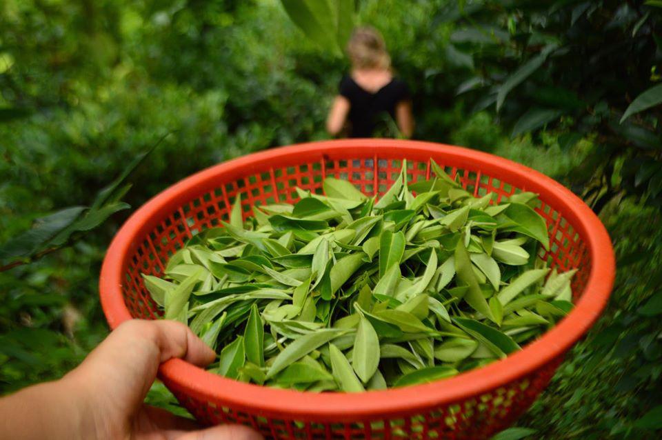 Cuộc sống bình yên, hạnh phúc của gia đình yêu thích trồng trọt tự cung tự cấp trên núi cao - Ảnh 15.
