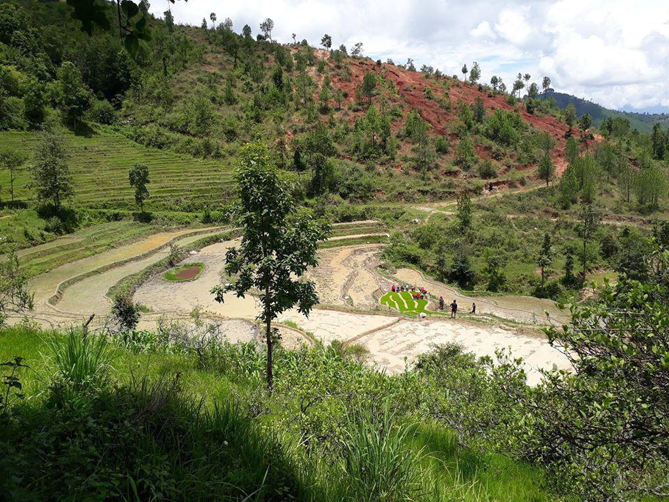 Cuộc sống bình yên, hạnh phúc của gia đình yêu thích trồng trọt tự cung tự cấp trên núi cao - Ảnh 13.