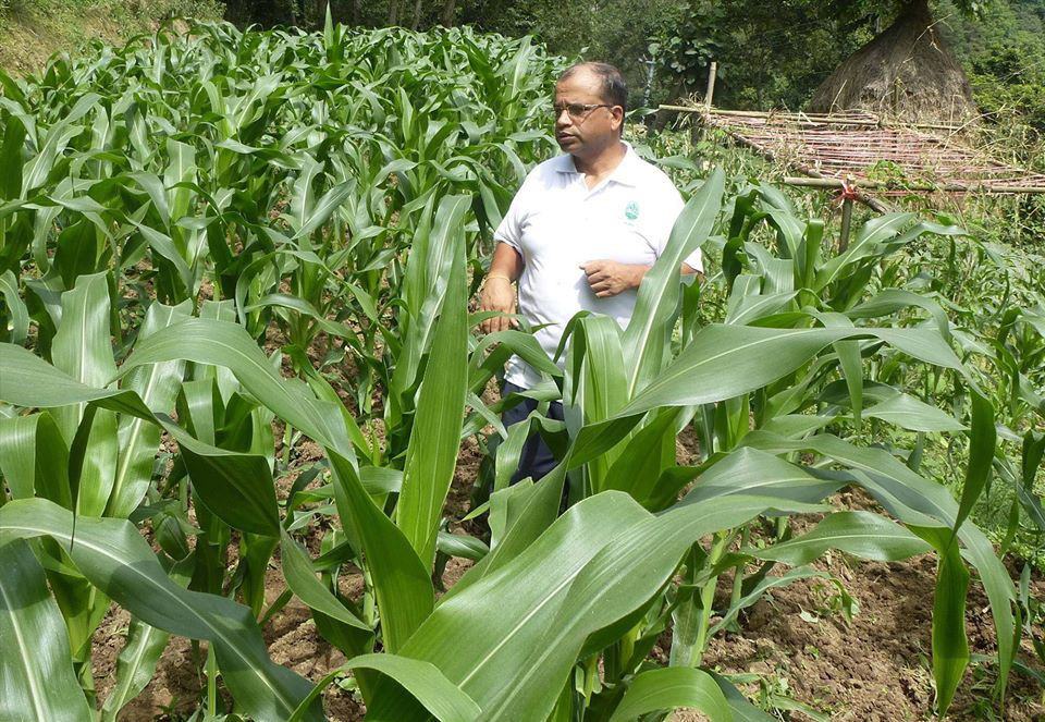 Cuộc sống bình yên, hạnh phúc của gia đình yêu thích trồng trọt tự cung tự cấp trên núi cao - Ảnh 12.