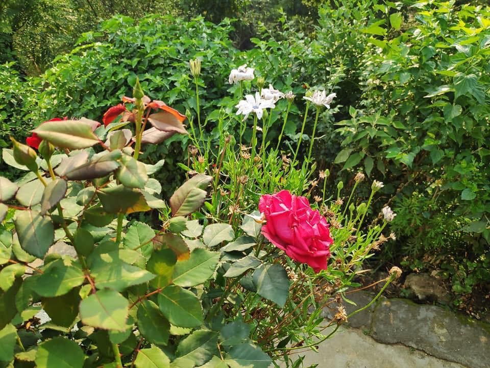 Cuộc sống bình yên, hạnh phúc của gia đình yêu thích trồng trọt tự cung tự cấp trên núi cao - Ảnh 11.