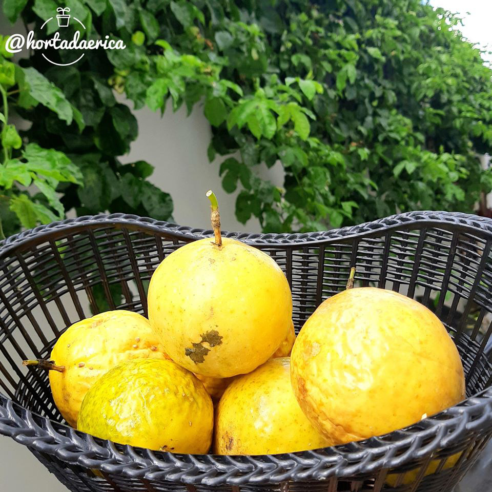 Vườn rau quả sạch tốt tươi rộng 32m2 của nữ y tá đam mê trồng trọt - Ảnh 7.