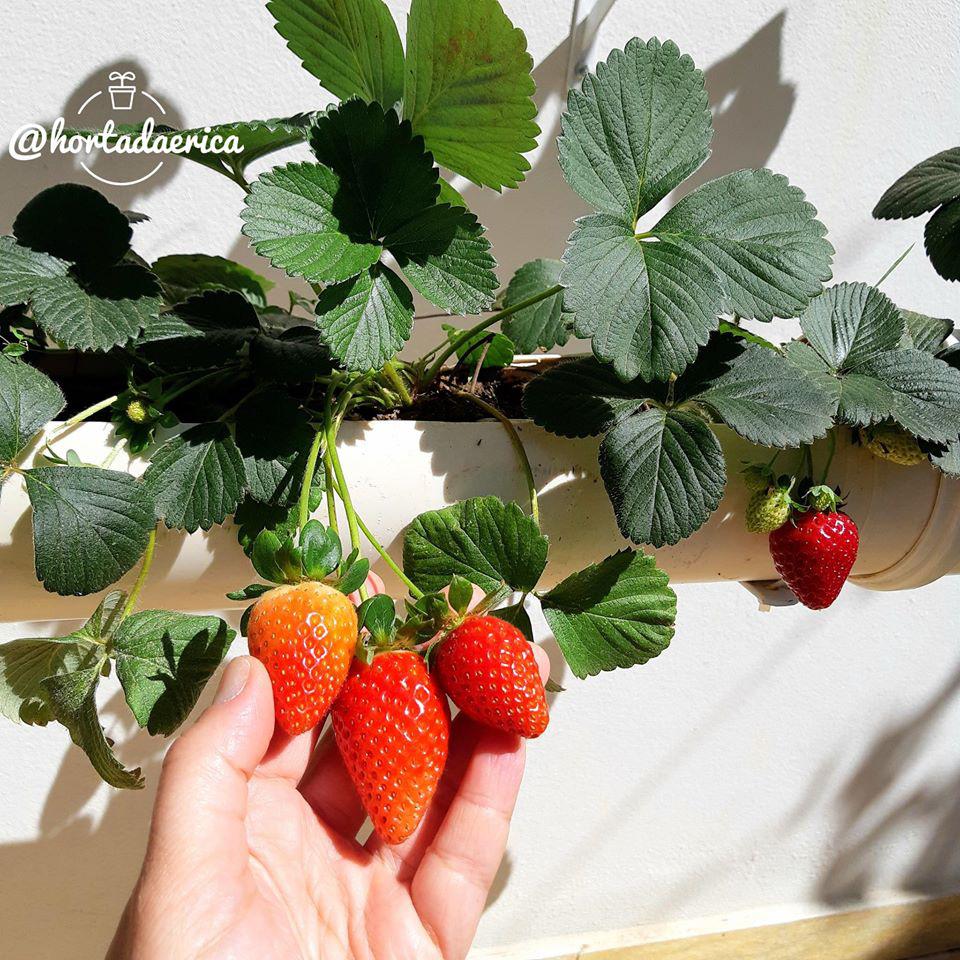 Vườn rau quả sạch tốt tươi rộng 32m2 của nữ y tá đam mê trồng trọt - Ảnh 5.