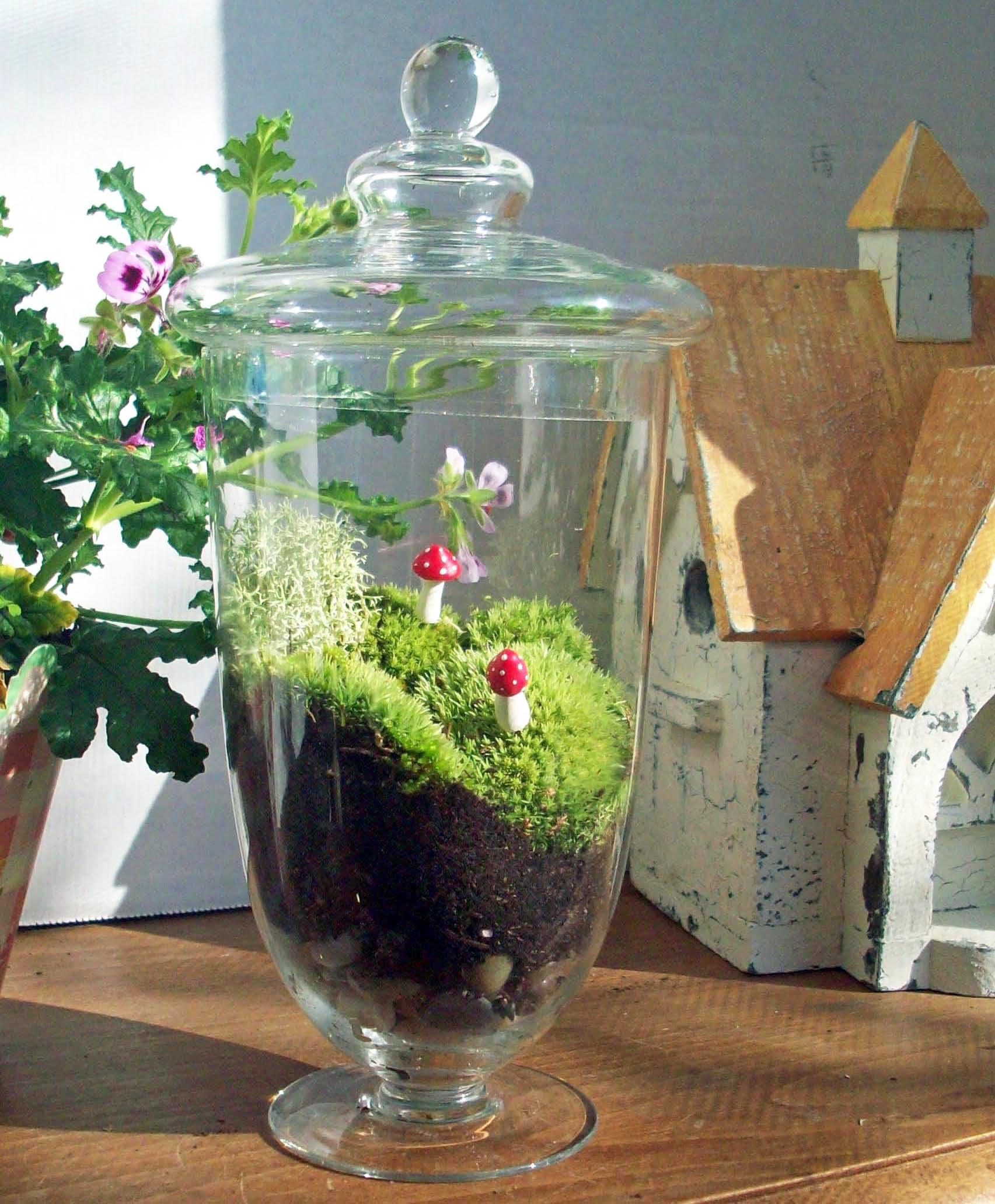 Nhà cực đẹp với tiểu cảnh Terrarium dễ thương