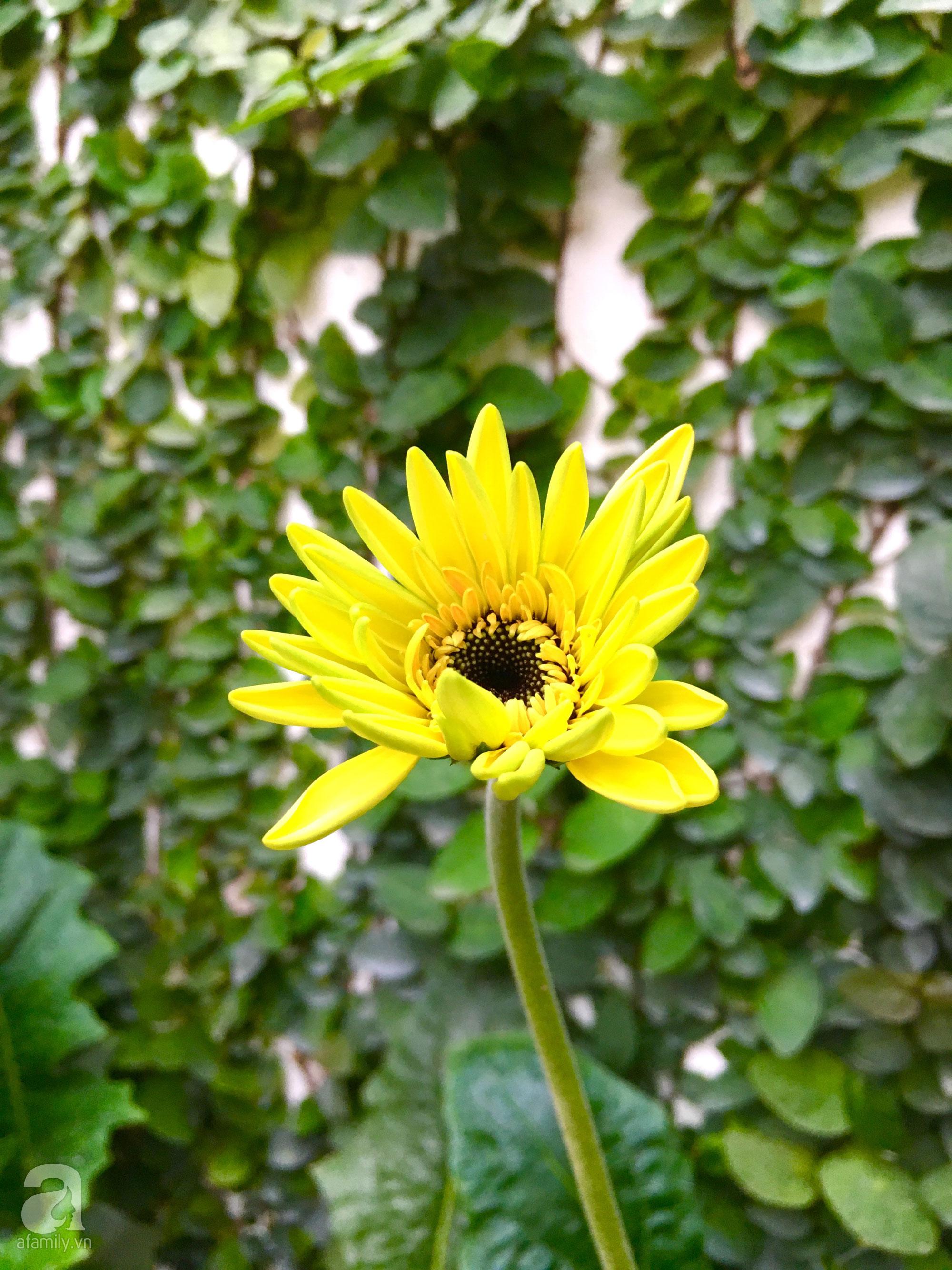 Bà mẹ sở hữu khu vườn 15m² tràn ngập sắc hoa đáng \u201cghen tị\u201d ở Kim Mã, Hà Nội