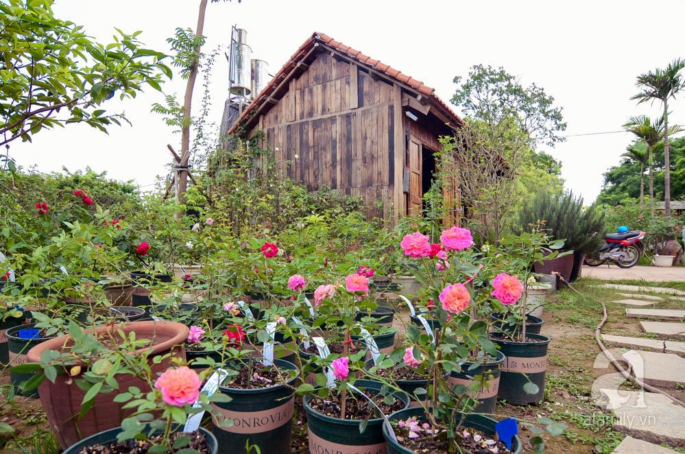 Rose Park - Vườn hoa hồng lớn nhất Việt Nam tại Hà Nội