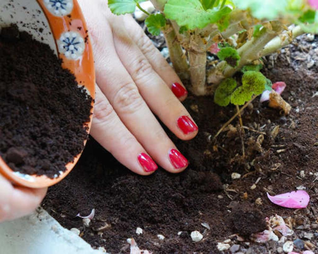 Làm phân bón hữu cơ cực tốt cho cây trồng với 7 loại thực phẩm