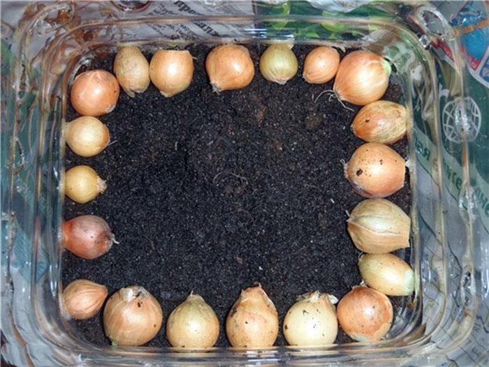 Cách trồng siêu dễ cho 6 loại cây gia vị không thể thiếu trong bữa cơm gia đình Việt - Ảnh 2.