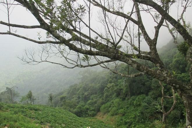 Từ trên cao nhìn xuống, thung lũng tưởng chừng sẽ rất nguy hiểm và khó để leo chèo nhưng những người lao động ở đây thường xuyên cheo leo trên những sườn núi như thế này.