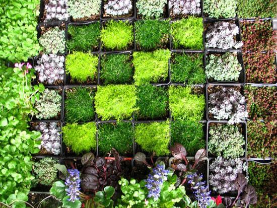"""Mang thiên nhiên vào nhà phố với """"khu vườn thẳng đứng"""" 11"""