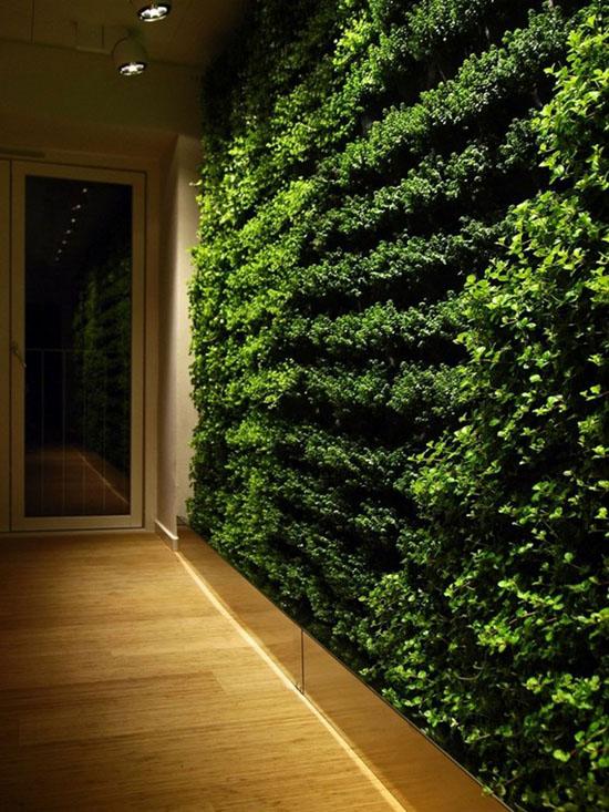 """Mang thiên nhiên vào nhà phố với """"khu vườn thẳng đứng"""" 14"""