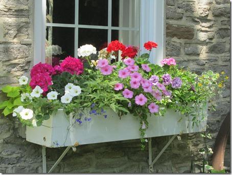 Trồng hoa dạ yến thảo che khuyết điểm cho ban-công cũ 8