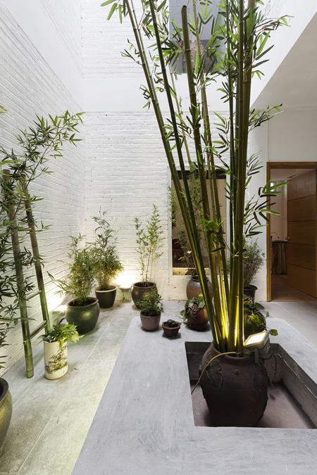 Tạo không gian sống sinh thái cho nhà phố với giếng trời 2