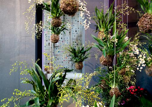 Ý tưởng làm vườn treo cực đơn giản 2