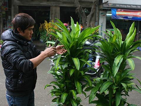 Những loài cây hấp thu khí độc, nên trồng trong nhà 1