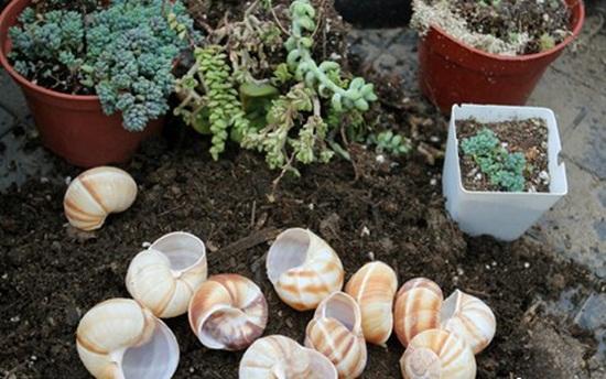 4 cách tạo khu vườn mini cho căn nhà của bạn 4