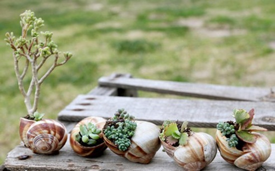 4 cách tạo khu vườn mini cho căn nhà của bạn 8