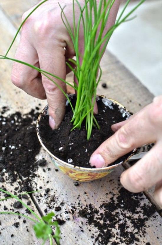 4 cách tạo khu vườn mini cho căn nhà của bạn 9