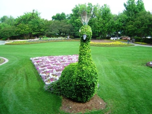 Gợi ý trang trí vườn xinh bằng cây cảnh nghệ thuật 6