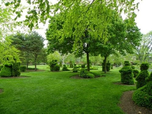 Gợi ý trang trí vườn xinh bằng cây cảnh nghệ thuật 11