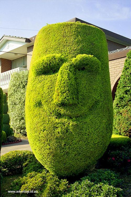 Gợi ý trang trí vườn xinh bằng cây cảnh nghệ thuật 9